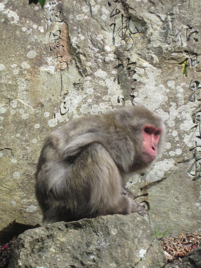 猿の画像 p1_17