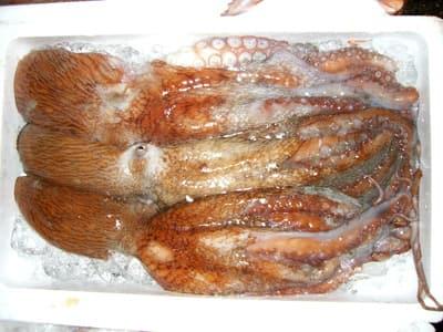水蛸(ミズダコ) 【語源】 最も馴染みがあるのは真蛸(マダコ)ですが、...  世の中のうまい話
