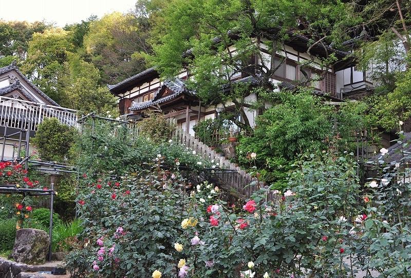 松尾寺のバラ園 (2)