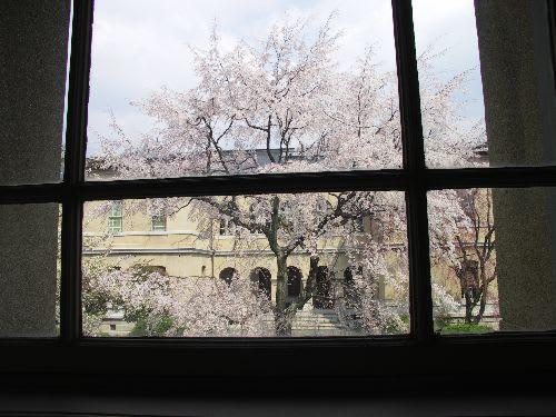 窓越しの桜