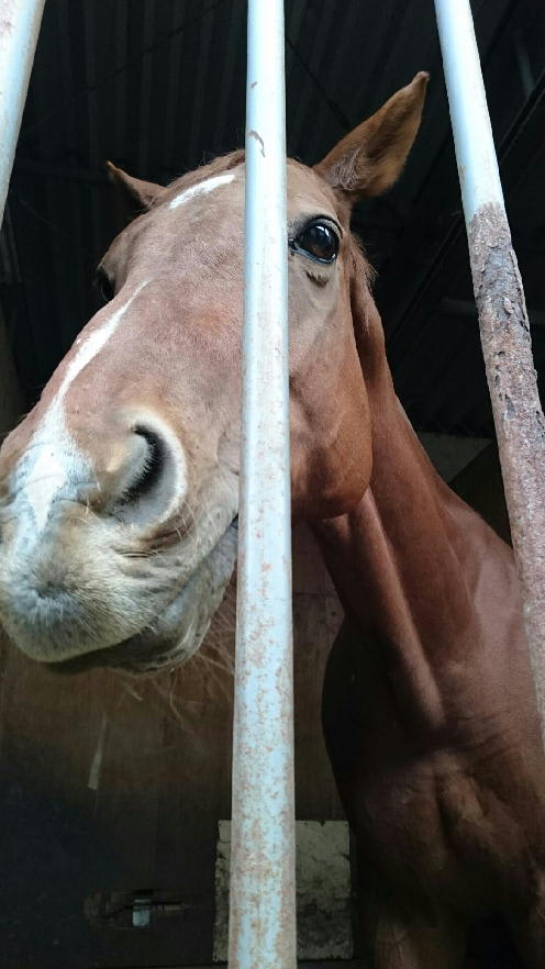 ジャンル:学校 コメント 競馬学校・騎手・厩務員受験サポート、牧場・乗馬クラブ就職 馬の学校 『