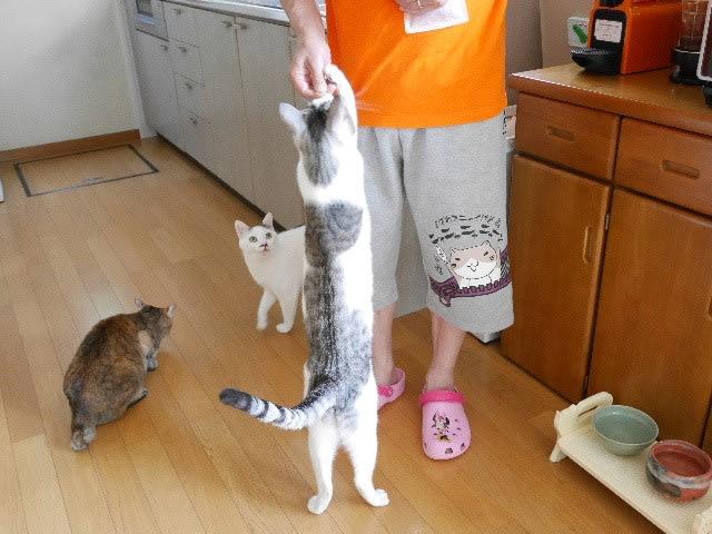 おとなも猫も楽しいおやつタイム【動画】