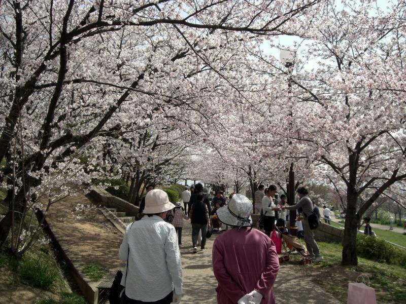 関西お花見2016~桜の名所・見ごろ・穴場・ライトアップ情報~