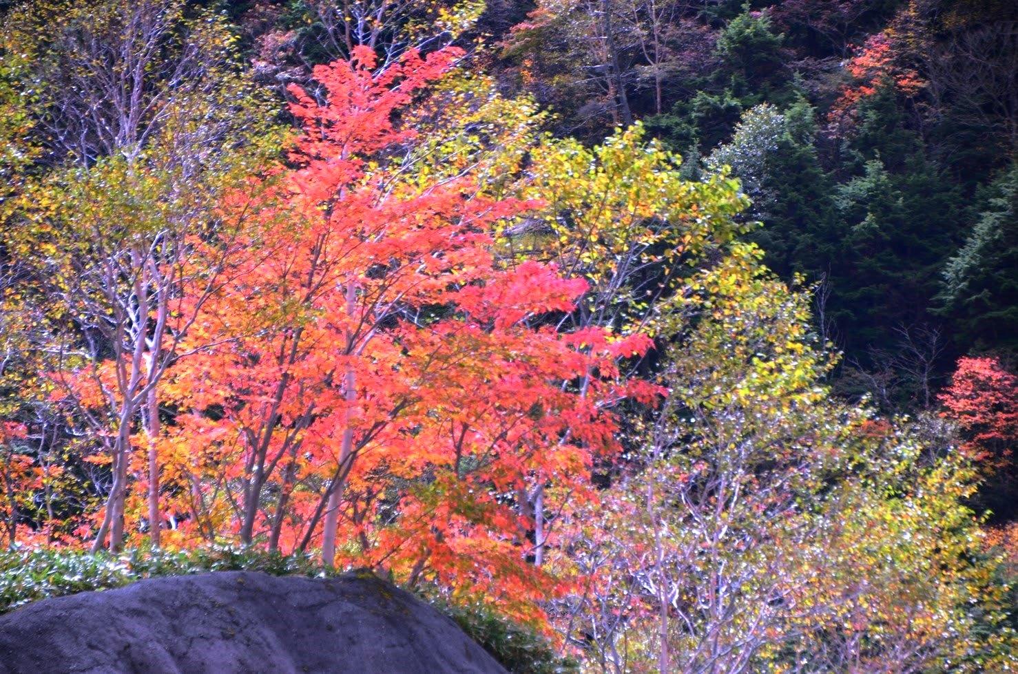 2016 10 06 金精峠の紅葉前線【わたしの里】