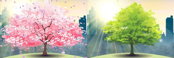桜の木の比較。ちょっと違いすぎる?