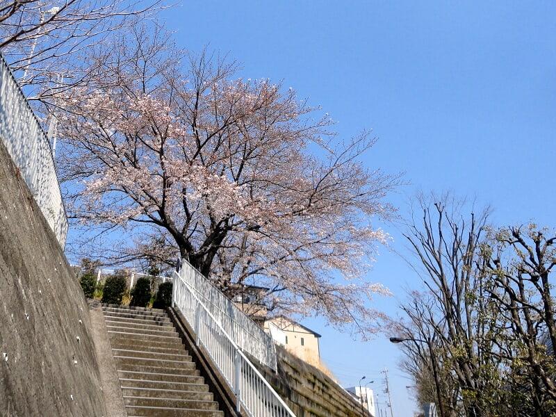 04月04日 側道沿いの桜
