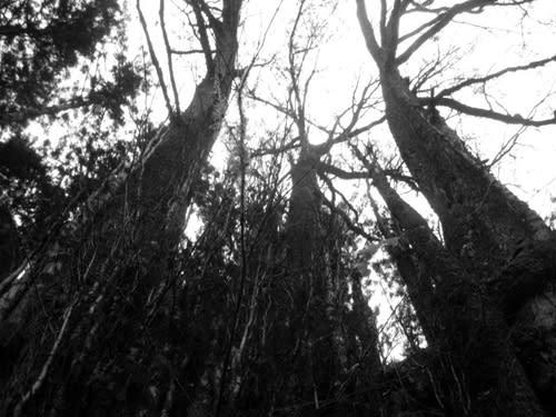 Tree01_2