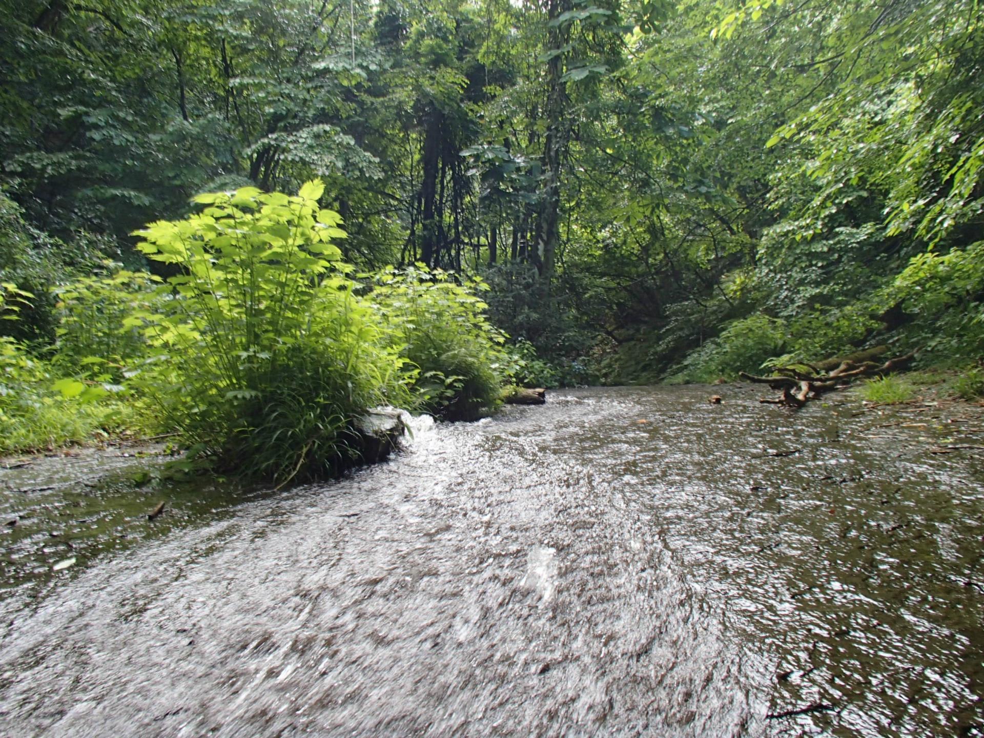 ナメ~ アップ 水量は平水か。 五郎七郎滝手前の滝 ゴロシチは水量少な...  ようさんの山物語