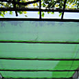 2011-5-20-2 遮光カーテン(寒冷紗)