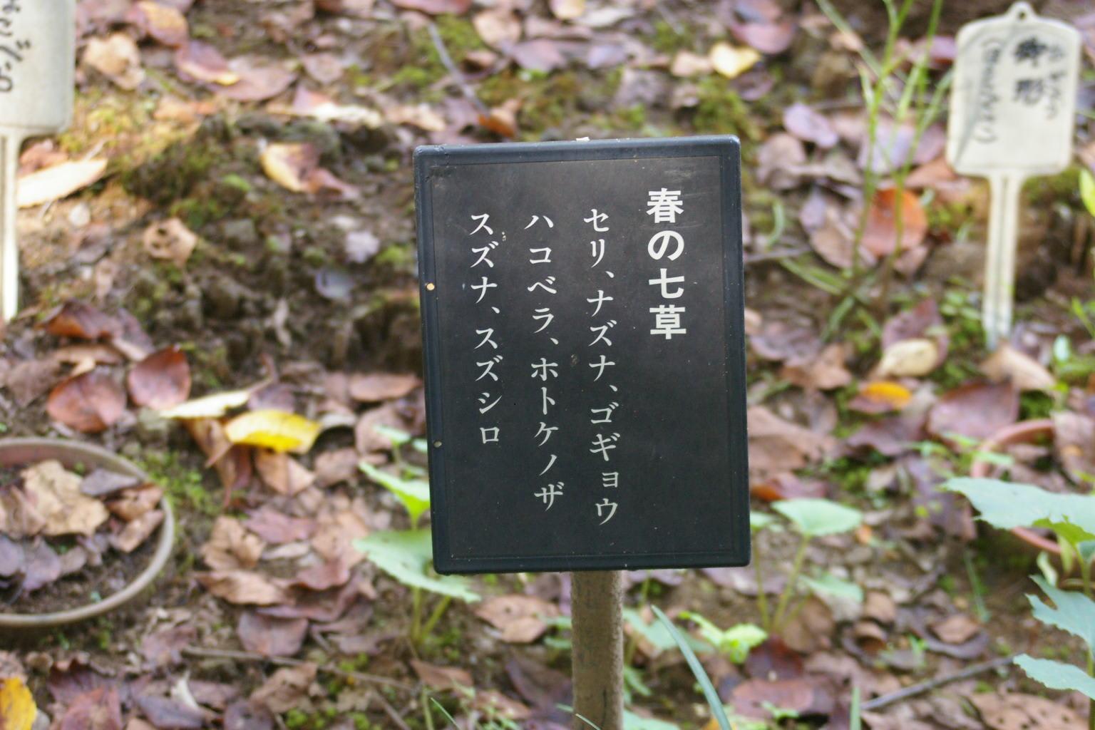 紫式部 墓栃木県