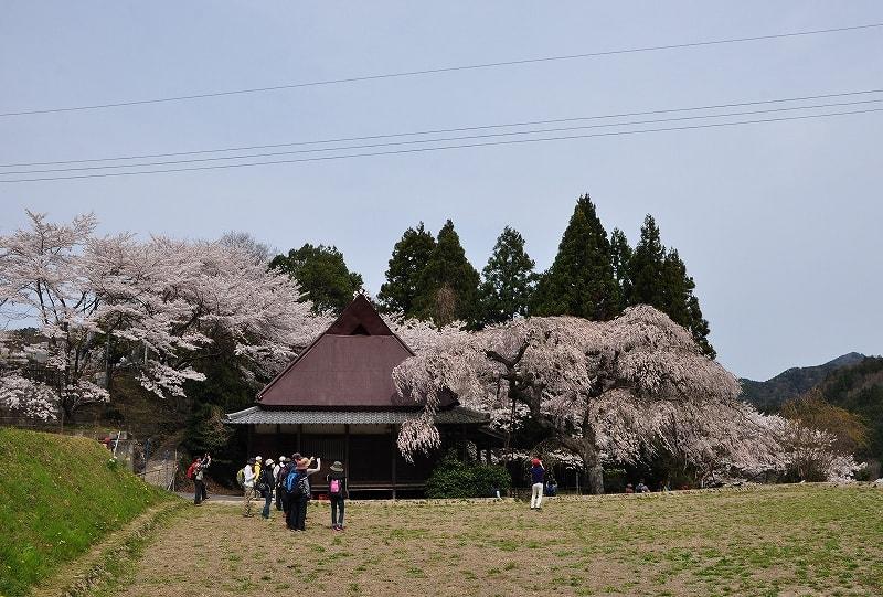 室生西光寺と桜