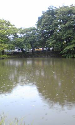 雨の菊名池