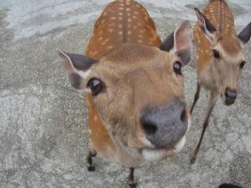 出来るだけ角が生えていない小さな鹿にやろうと場所を選ぶのですが、そ...