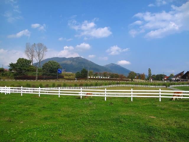 どこまでも続く緑の草原にジャージ牛が現れた 蒜山ジャージ牛とジャージ牛...  日刊 安頓写真ブ