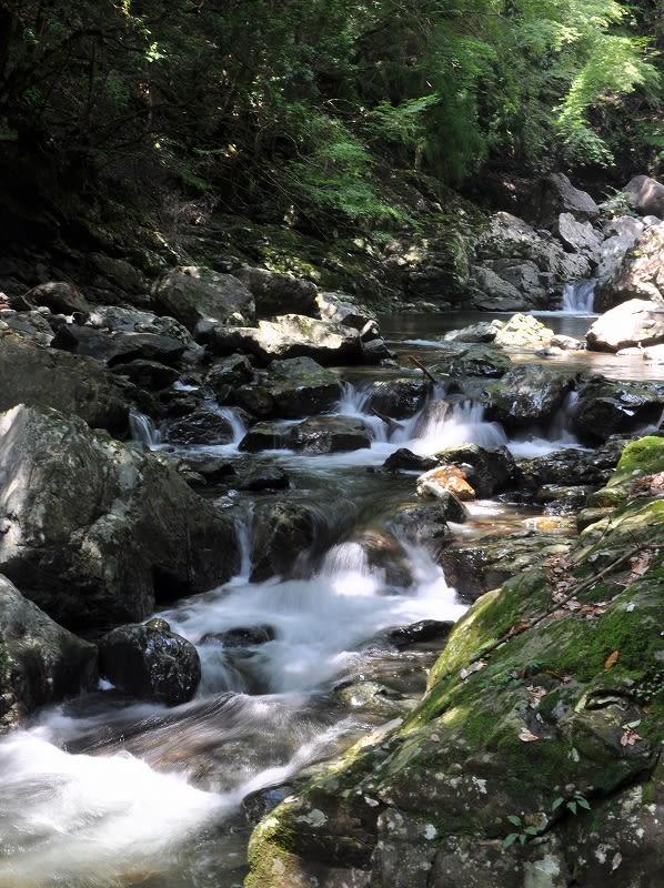 ツキ谷渓流