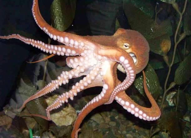 Mollusks Octopus : 無脊椎動物とは : すべての講義