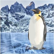 風邪をひかない?南極の不思議