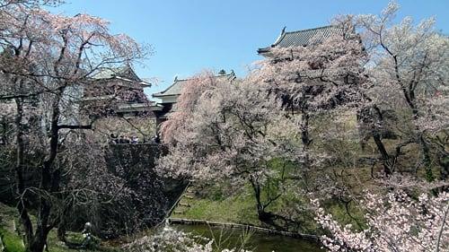 上田城跡の千本桜まつり