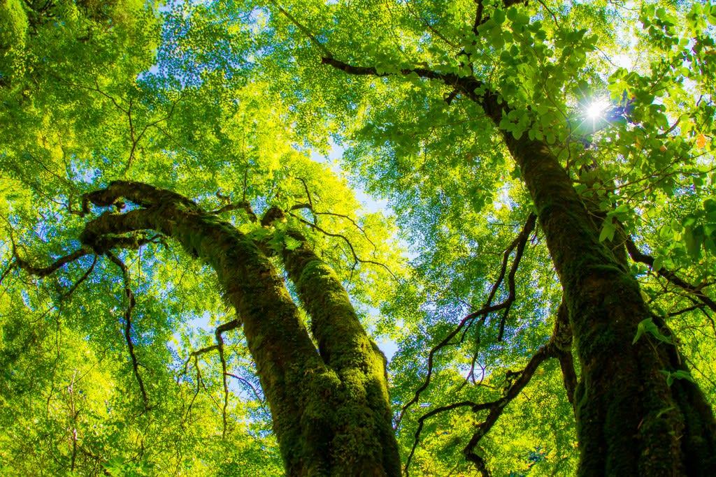 木々の緑の写真