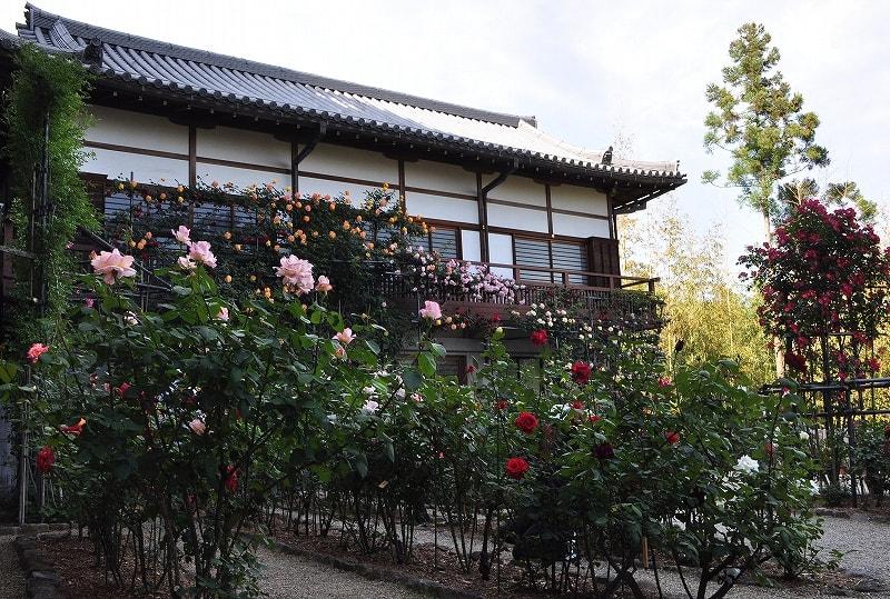 松尾寺バラ園と建物