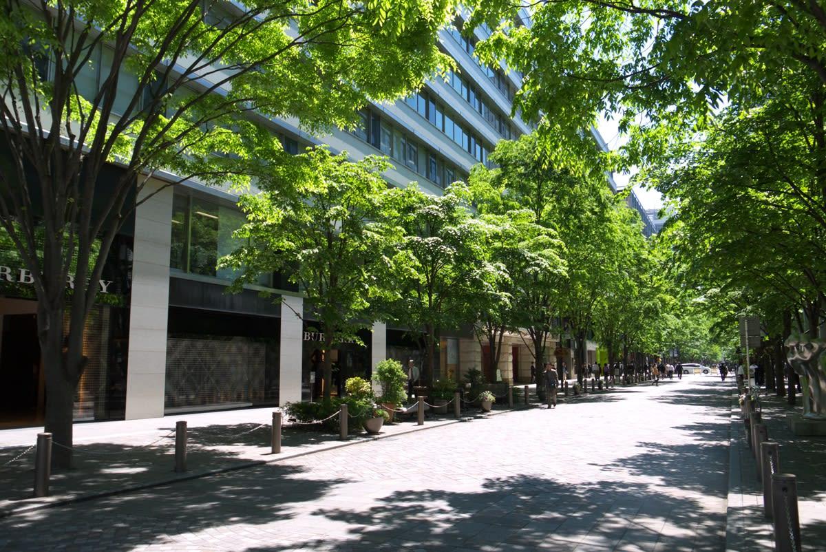 http://blogimg.goo.ne.jp/user_image/11/ec/9f5ec7774330eff338ed78b0945961af.jpg