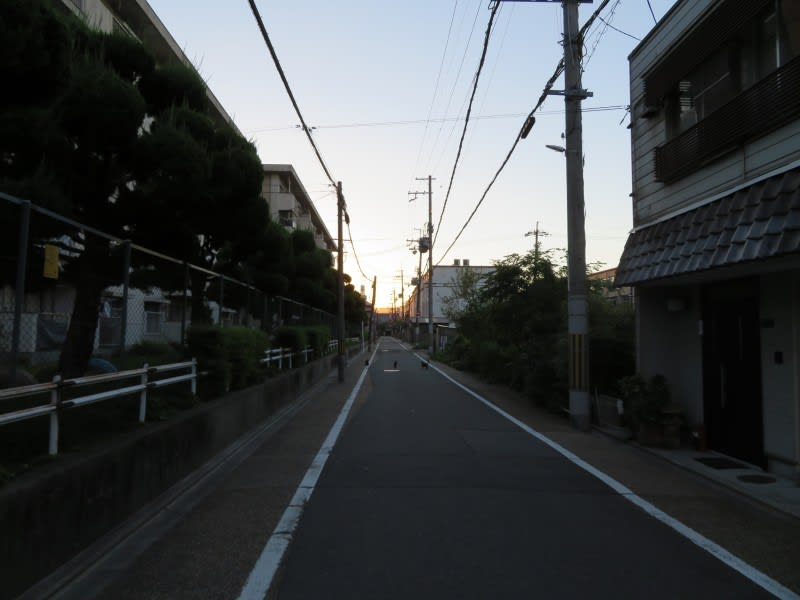 IMG_4319.JPG