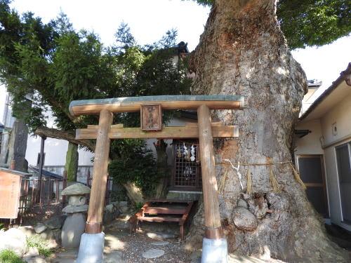 松本の城下町湧水群歩き回り 槻井泉神社湧水(つきいずみじんじゃのゆうすい)