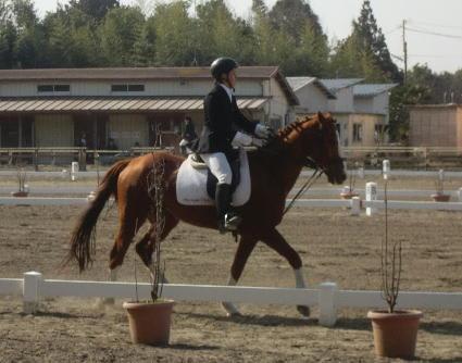 - 競馬学校・騎手・厩務員受験サポート、牧場・乗馬クラブ就職 馬の学校 『アニマル・ベジテイショ