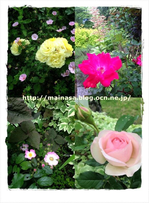 Mainasa_garden