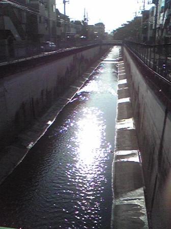 呑川の写真