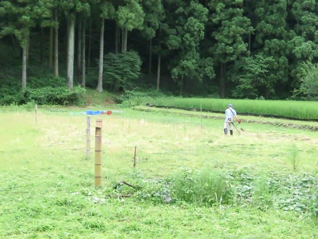 オーナー草刈り