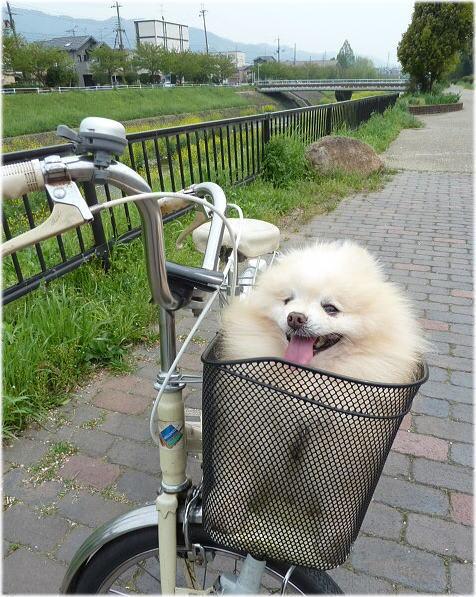 自転車で、いつも歩いて行って ...