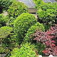 2011-6-4-30 ツル性植物