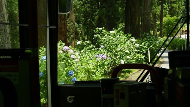 バスの車窓から紫陽花