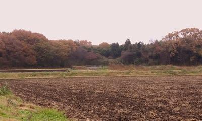 筑西市内の里山の紅葉