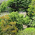 2011-6-4-32 ツル性植物