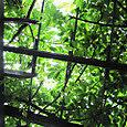 2011-6-4-26 ツル性植物