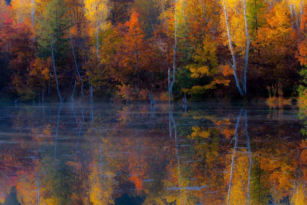 まいめの池の紅葉