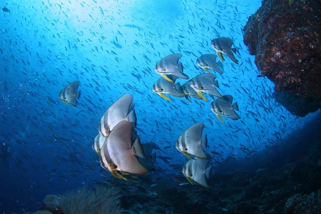 モルディブ ダイビング に対する画像結果