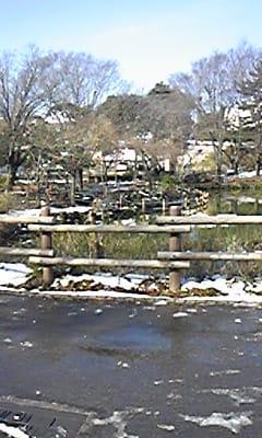 雪景色の菊名池