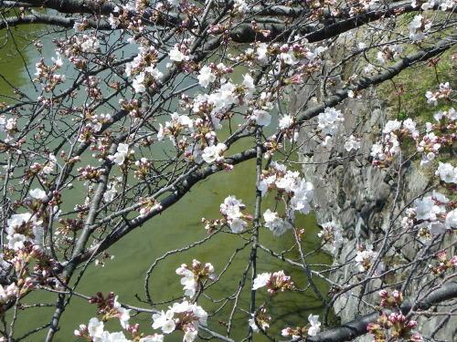 二の丸裏御門橋の桜 2011/4/13