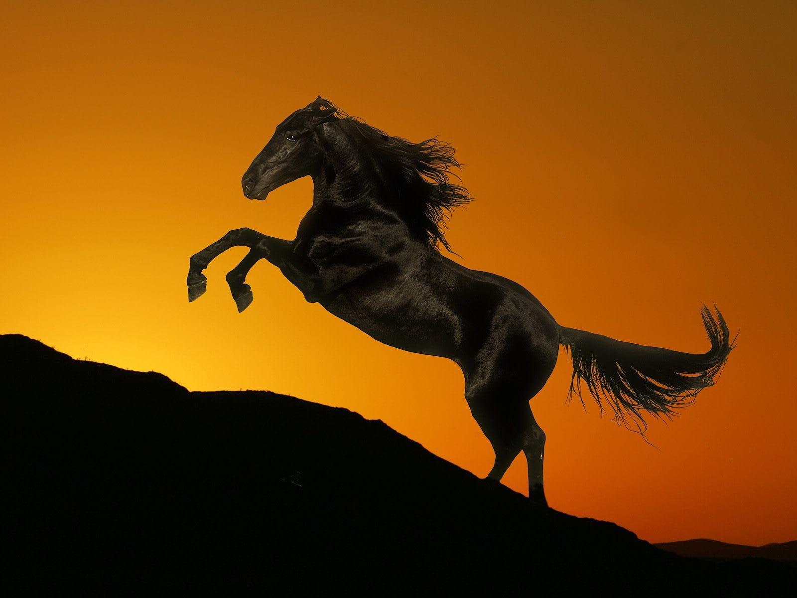 2014年年賀状用 ~素敵な馬の写真画像~ - パソコンど~じょ~左近山教室