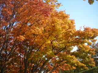 紅葉の五稜郭公園(2011年11月3日)