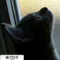 にほんブログ村 猫ブログ★いつもありがとニャン♪ニャン♪(=^ω^=)