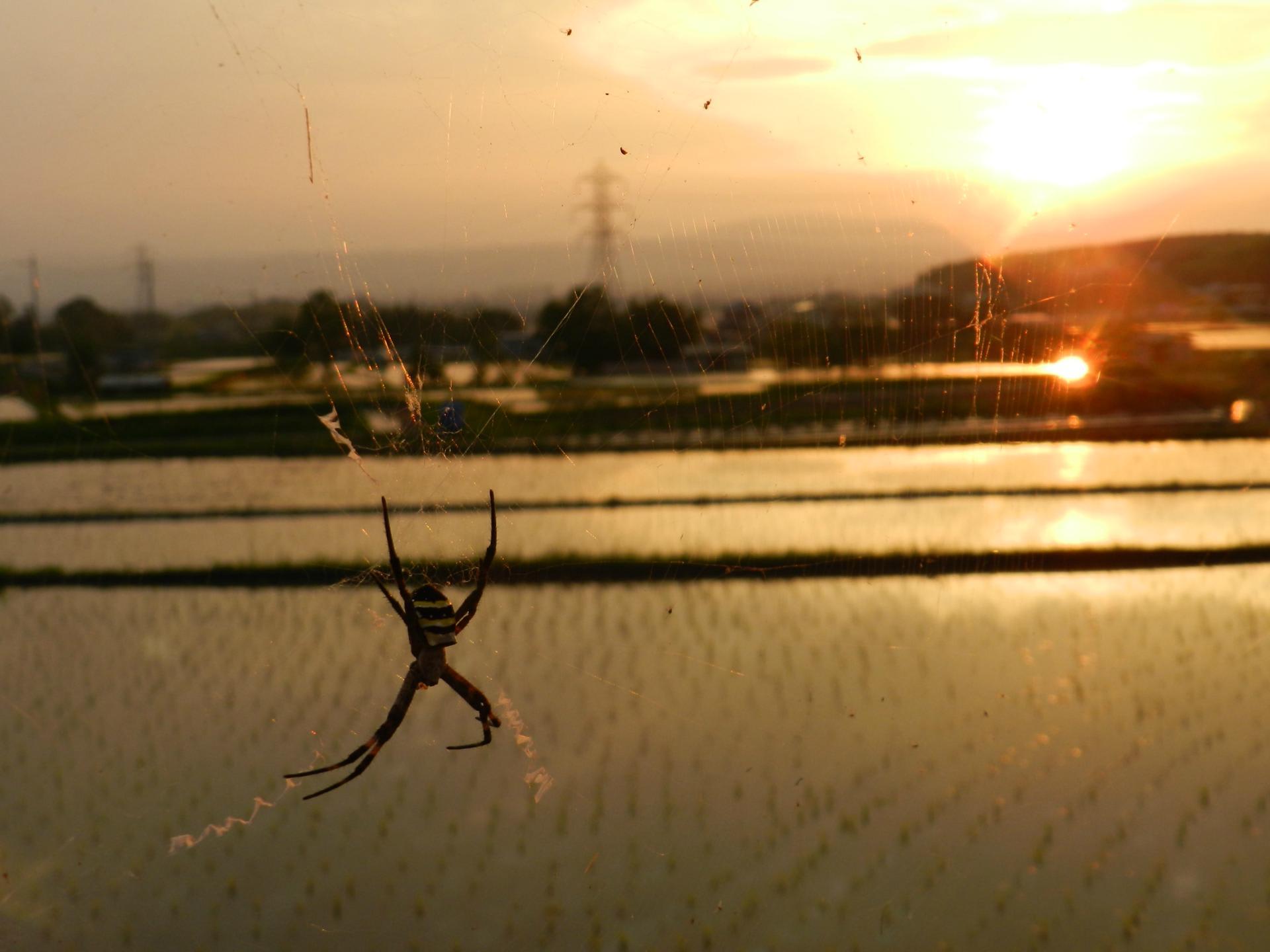田園の夕日景色 - メジロさんの日々の備忘録