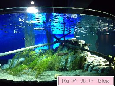 札幌 観光スポット千歳市 サケのふるさと 千歳水族館コメント