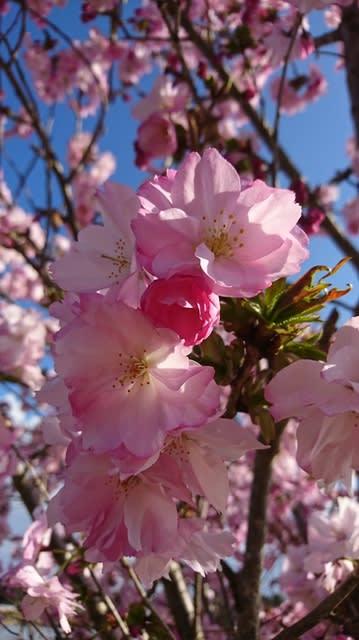 桜庭あつこの画像 p1_34