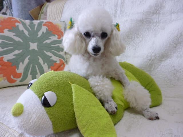 お茶犬の画像 p1_20