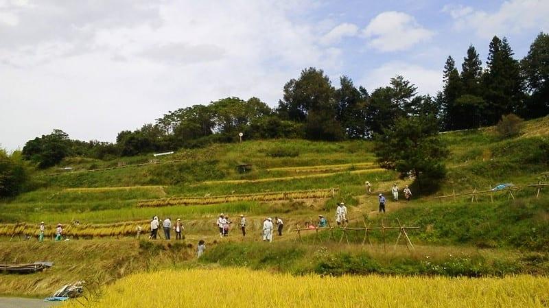 Yokoneinekari20120930_2