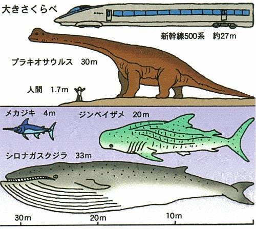 シロナガスクジラの画像 p1_32